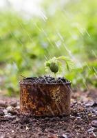 bomen ontsproten in roestige blikken en regendruppels