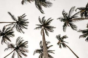 palmbomen van onderen