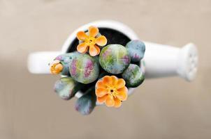 cactus in een witte bloempot foto