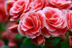 sluit roze fee steeg in tuin foto