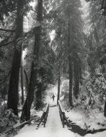 sneeuw bedekt pad tussen bomen in Canada