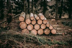 stapel hout logboeken foto