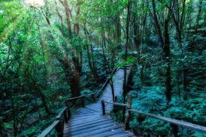 houten pad in het bos
