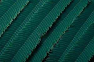 groene bladeren, donkere achtergrond
