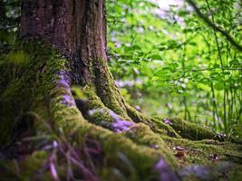 boomwortels met mos in een bos