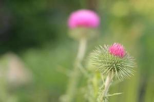 close-up van een mooie roze bloem