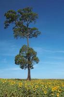 een boom en een zonnebloem foto