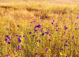 prachtige kleurrijke bloemen