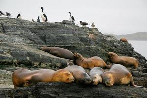 zeeleeuwen en aalscholvers foto