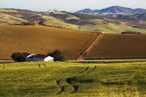 landschap met korenvelden, heuvels en witte stad olvera, andalusië, spanje