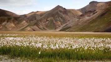 landmannalaugar en een veld met turfpluis