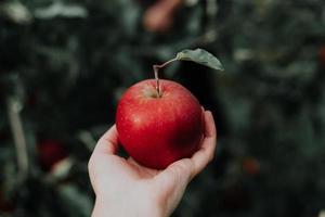 een rode appel foto