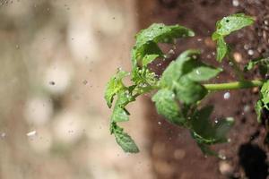 groene plant in de regen