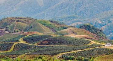 hill sa pa. lao cai vietnam foto