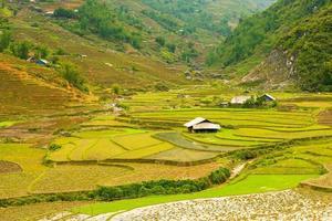 rijstvelden in de bergen, vietnam