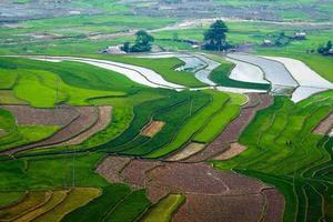 rijstveld op terrassen in vietnam foto