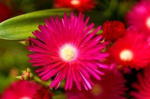 bloemen op het eiland sao miguel