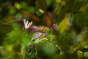 schoonheid van de natuur foto