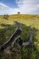 platteland van de Algarve
