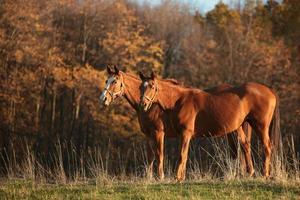 paarden op weiland