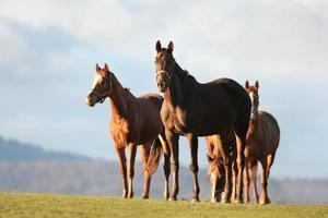 paarden bij zonsopgang