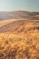 gouden veld bij zonsondergang in Toscane, Italië