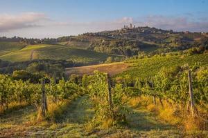 druiven en wijnstokken dichtbij Toscaans dorp