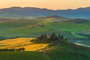 Toscaanse olijfbomen en velden in de buurt van boerderijen, Italië