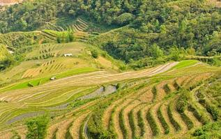 rijst terrassen in het noorden van vietnam