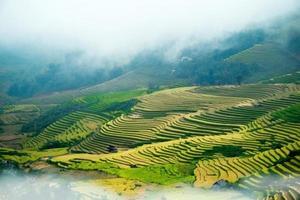 rijstvelden op terrassen foto