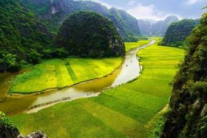 gekookte rijstvelden en rivieren in tamcoc net, ninhbinh, vietnam foto