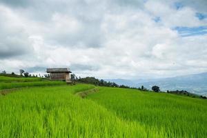 groen rijstveldterras en houten hut.