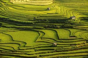 rijstvelden bereiden de oogst voor in het noordwesten van vietnam foto