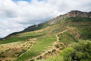 wijngaarden in de Douro-vallei