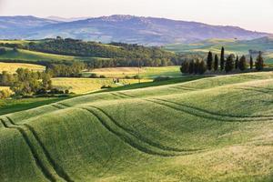 rustig zomerveld in Toscane