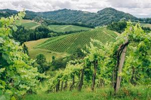 wijnstokken in het zuiden van Stiermarken foto