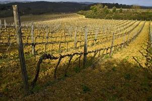 wijngaard Toscane, Italië in het voorjaar
