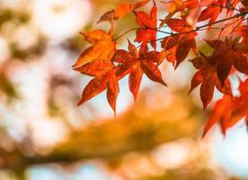 herfstbladeren, zeer ondiepe focus