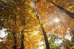herfstbladeren in de natuur