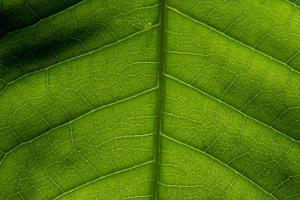 macro achtergrond blad patroon
