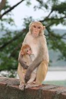 aap die haar baby de borst geeft