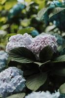 fotografie met roze bloemblaadjes