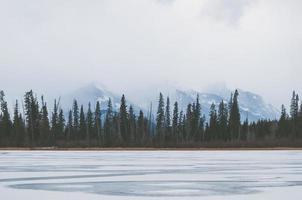 bevroren meer dichtbij hoge groene bomen foto