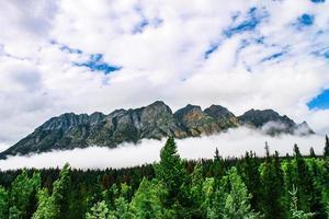 schilderachtig uitzicht op bergen en bos foto