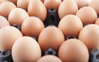 eieren paneel