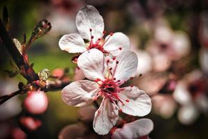 het is lente...