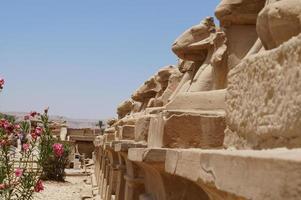 laan van sfinxen in de tempel van Karnak foto
