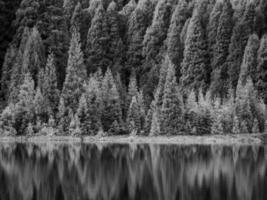 grijswaardenfoto van bomen in de buurt van water foto