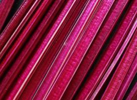 fotografie van rode bietstengels voor voedselachtergrond foto