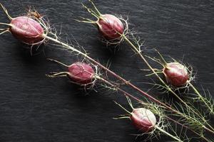 damascus nigella peulen foto